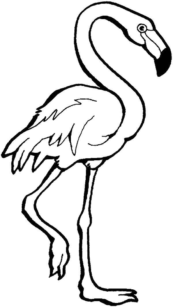 Раскраска птицы Скачать Контур, бабочка.  Распечатать ,контуры бабочек для вырезания,