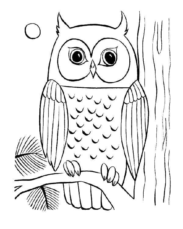 Раскраска Сова Скачать птицы, Сова.  Распечатать ,птицы,