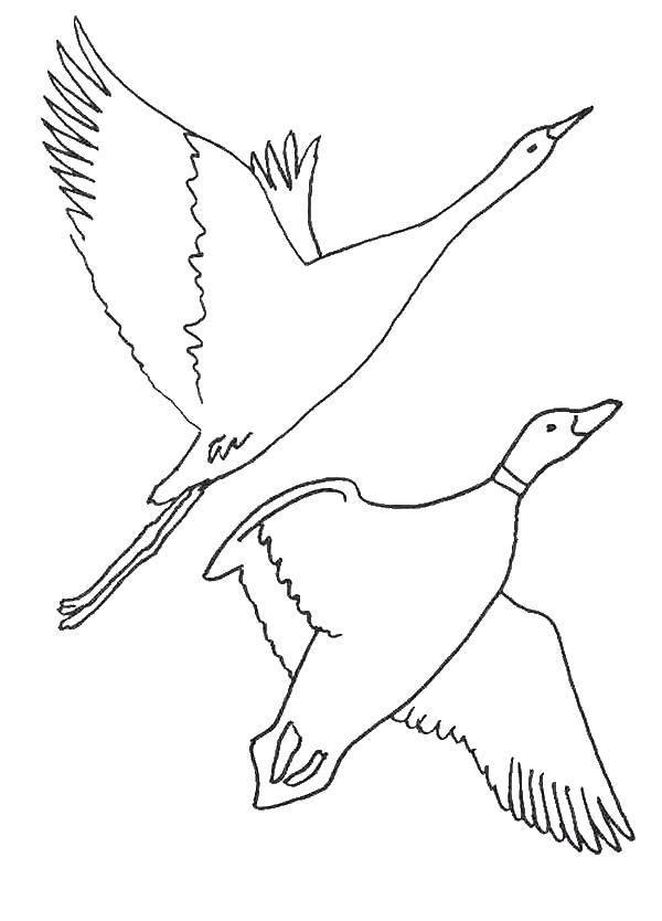 раскраски гуси раскраска гуси лебеди сказки