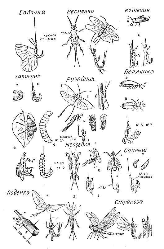 раскраски насекомые раскраска названия насекомых насекомые