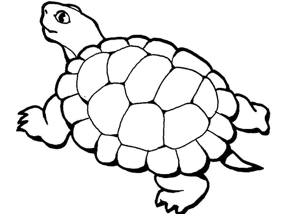 Раскраска черепаха Скачать Транспорт, поезд, рельсы.  Распечатать ,Транспорт на английском,