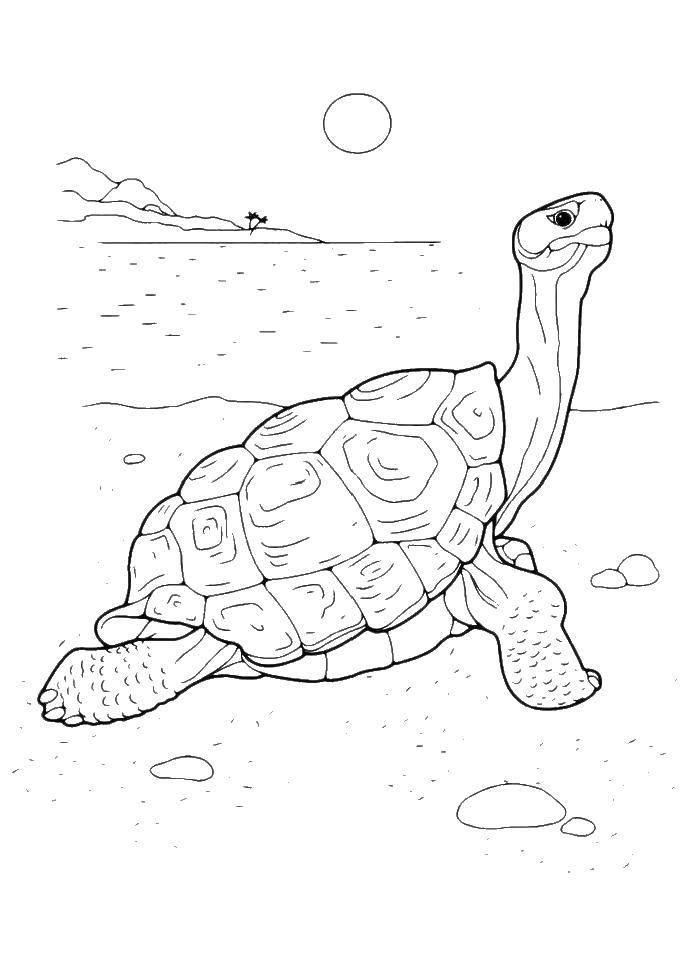 Раскраска черепаха Скачать ромашка, смайлик.  Распечатать ,Узоры с цветами,