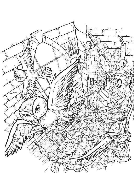 Раскраска Гарри Поттер Скачать ,Лейка, сад,.  Распечатать