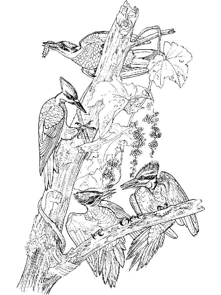 Раскраска Дятел Скачать ,мультфильмы, Ариэль, русалка,.  Распечатать