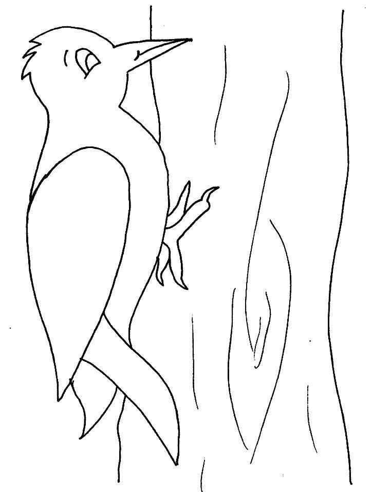 Раскраска Дятел Скачать ,птицы, дятел,.  Распечатать