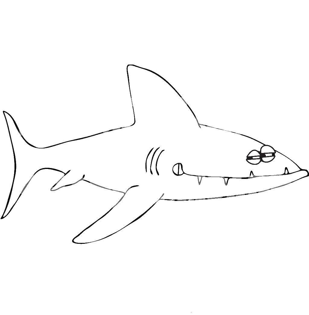 Раскраска Акулы Скачать Животные, единорог.  Распечатать ,единороги,