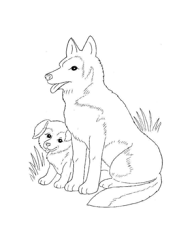 Раскраска Собака и щенок на полянке Скачать собака, щенок, полянка.  Распечатать ,домашние животные,