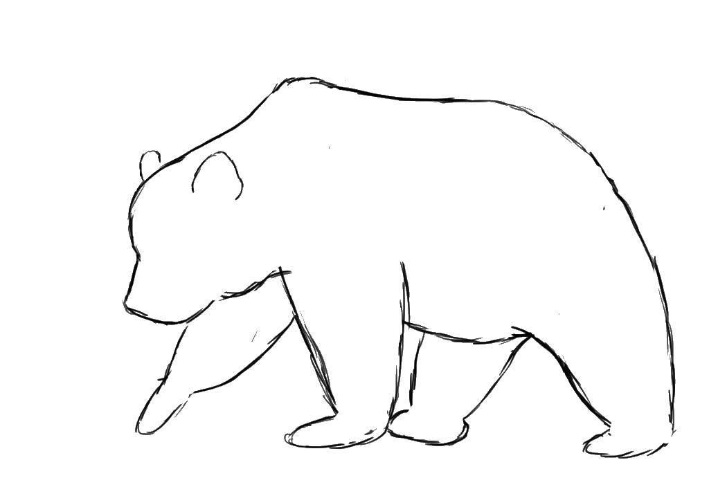 Раскраска Контур медведя Скачать медведь, животные, контур.  Распечатать ,Контур медведя для вырезания,