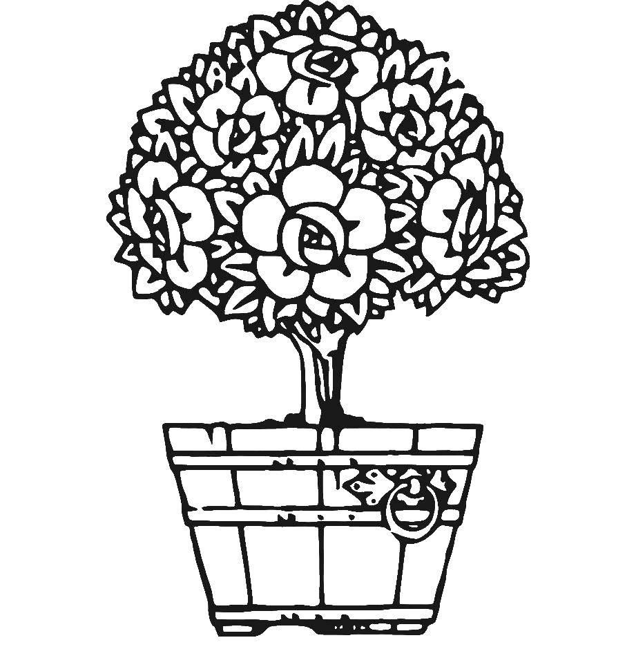 Раскраска Цветок в горшке Скачать цветы, горшок.  Распечатать ,цветы,