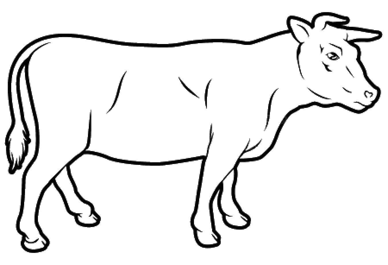 Раскраска Животные Скачать .  Распечатать