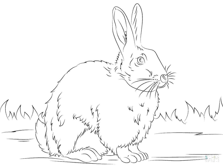 Название: Раскраска Зайка. Категория: Животные. Теги: животные, заяц.