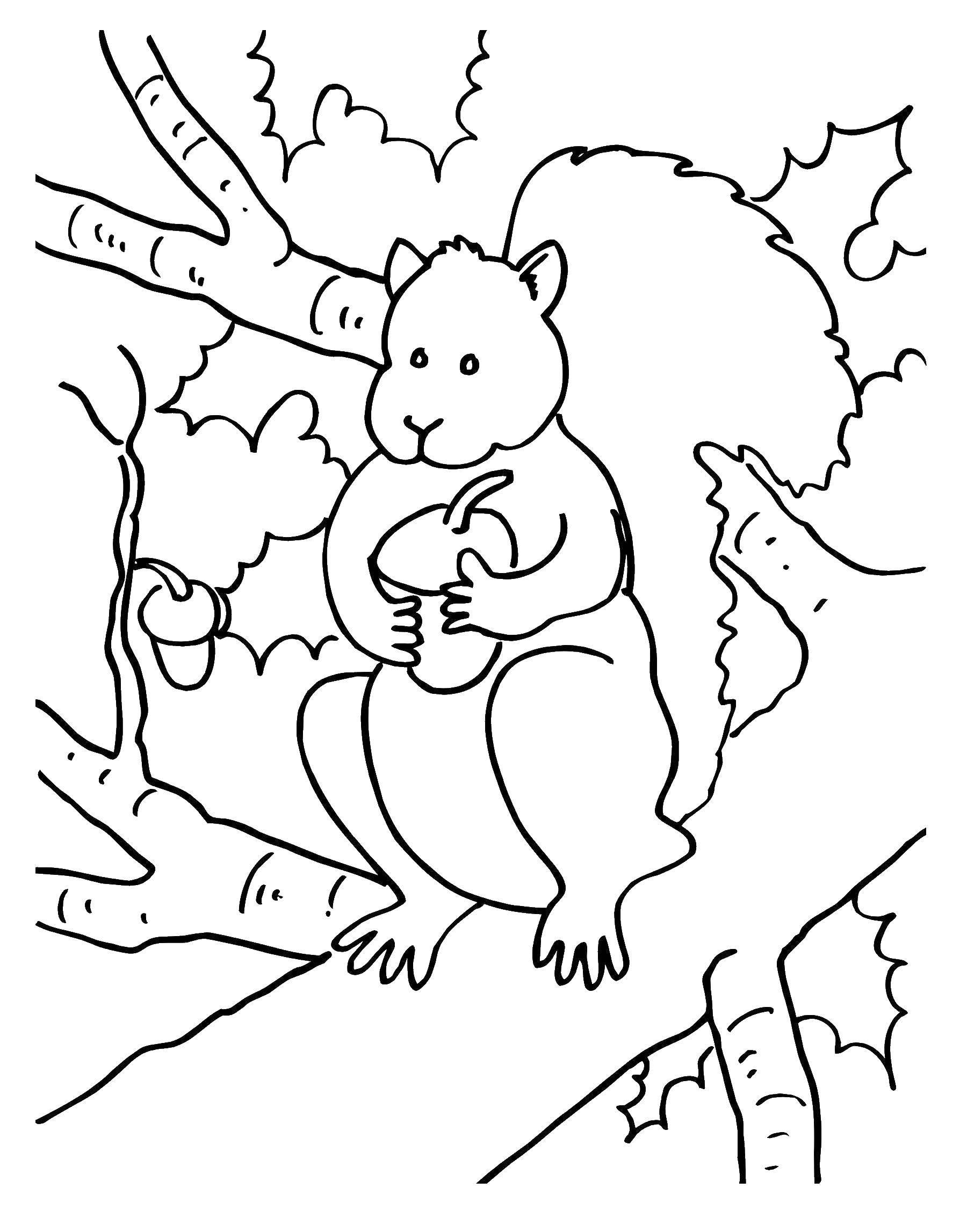Раскраска белочка Скачать лисичка, лисята.  Распечатать ,лисичка,