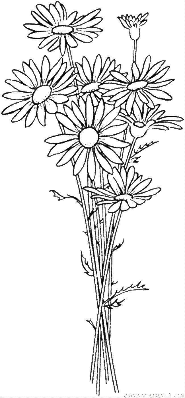 Раскраска цветы Скачать единорог, крылья, хвост.  Распечатать ,мой маленький пони,