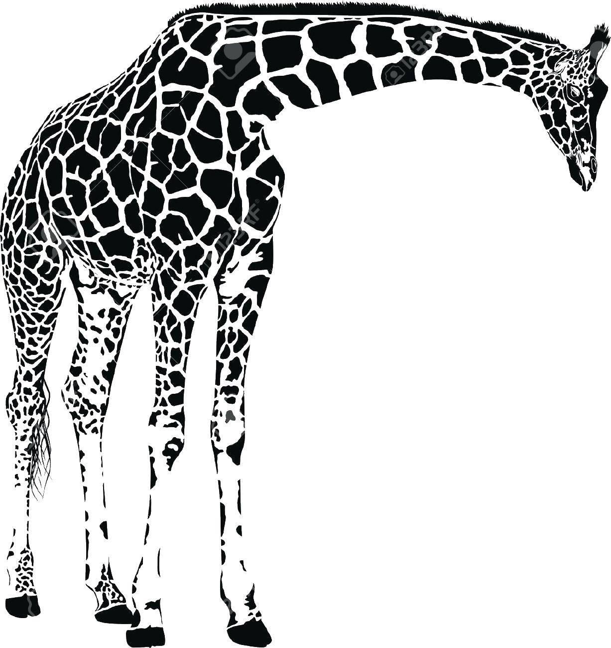 Раскраска жираф Скачать контур, ладони, пальцы.  Распечатать ,Контур руки и ладошки для вырезания,