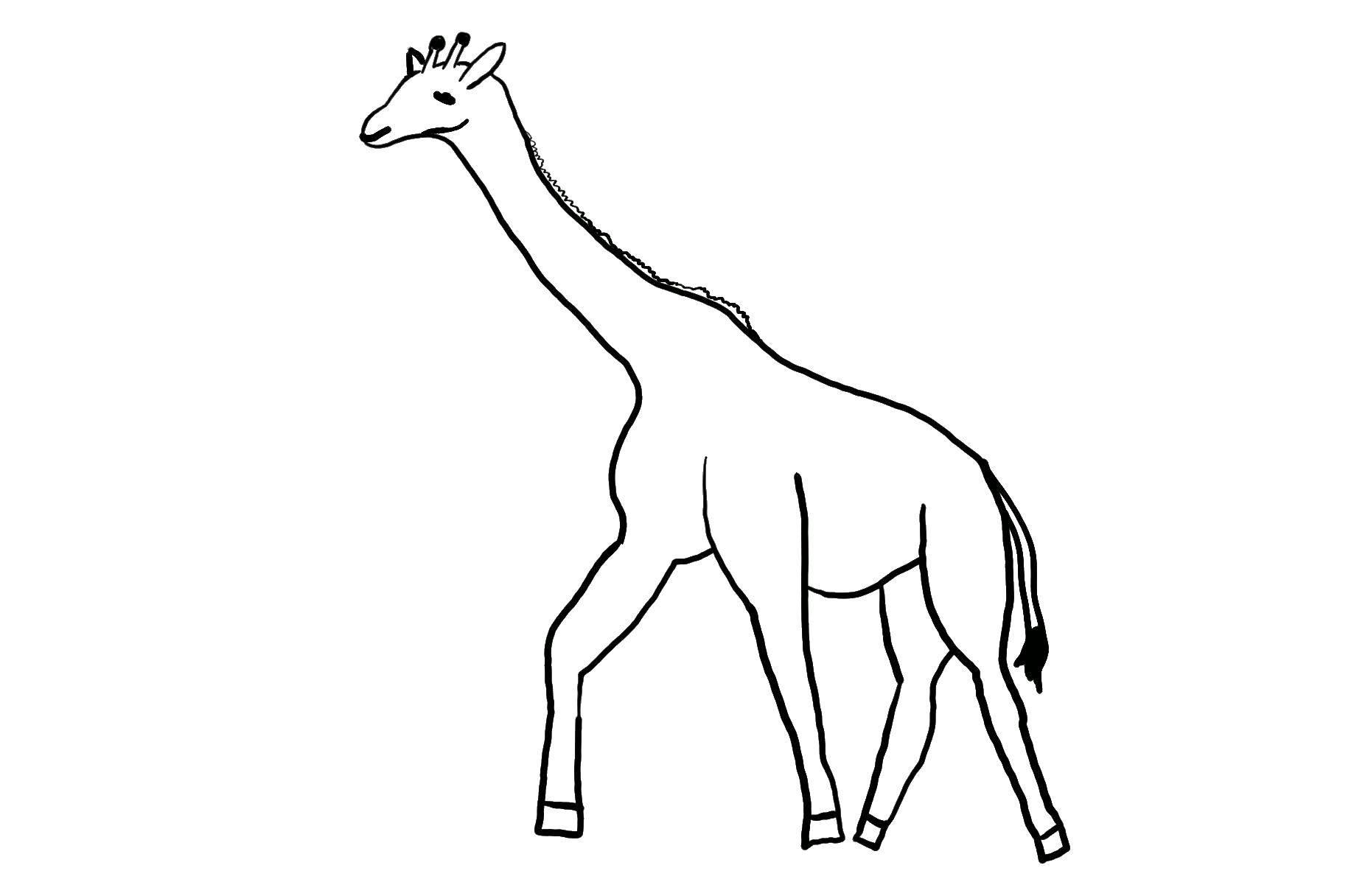 Раскраска Контур жирафа для вырезания Скачать Рептилия, лягушка.  Распечатать ,Раскраски для малышей,