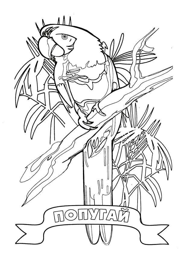 Раскраска попугай Скачать ,дракон, змей, усы, хвост,.  Распечатать