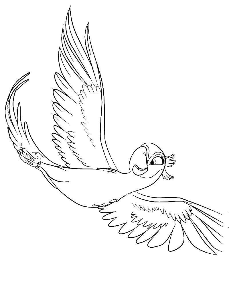Раскраска попугай Скачать ,Птицы, попугай,.  Распечатать