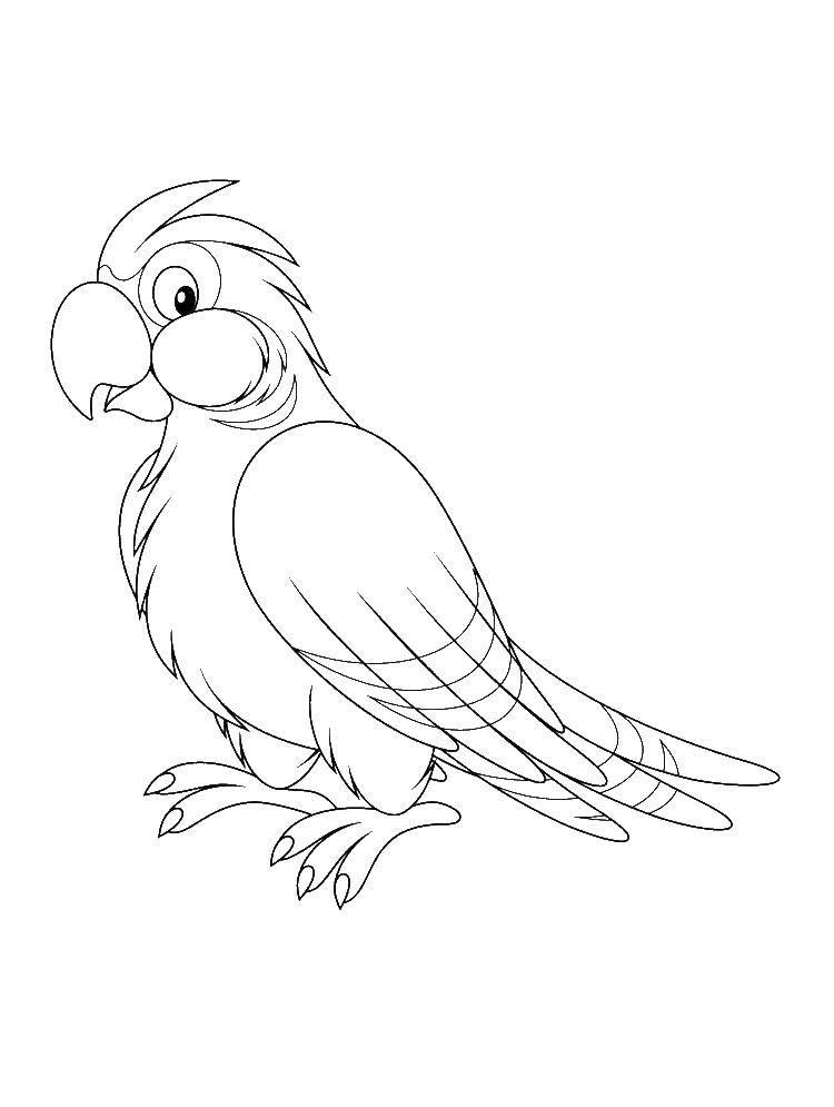 Раскраска попугай Скачать .  Распечатать