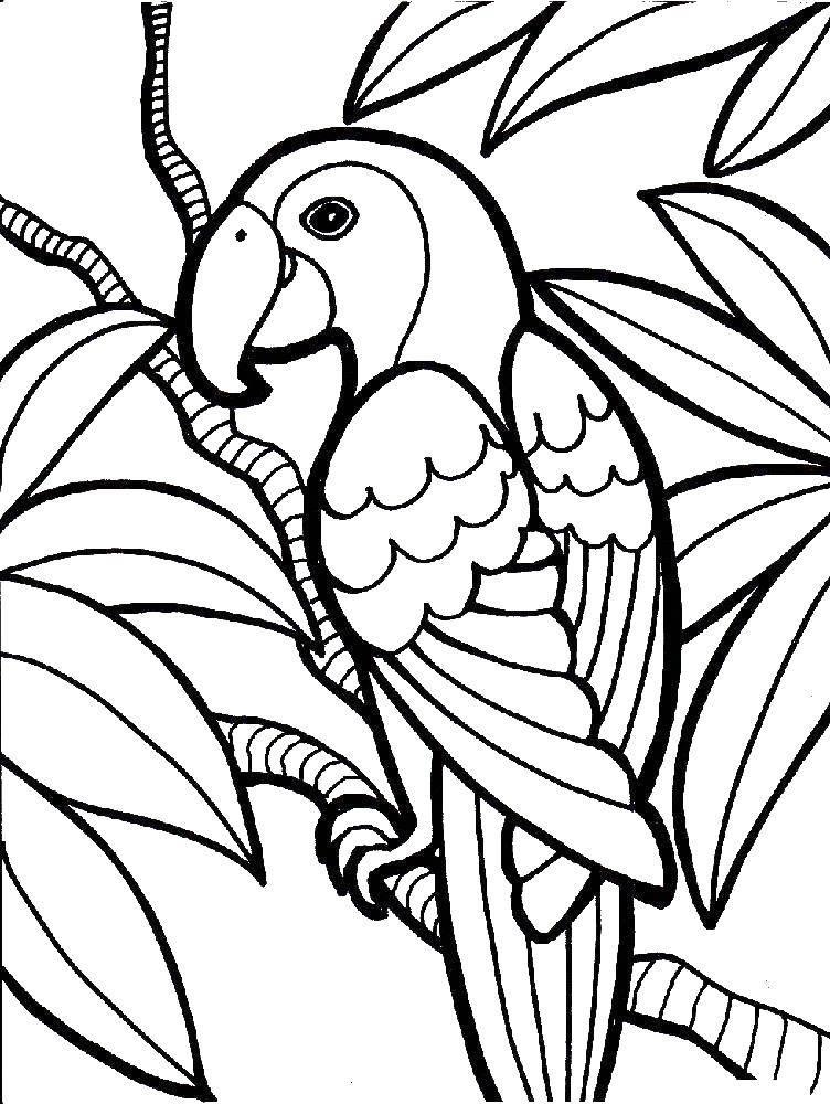Раскраска попугай Скачать гимнастика, гимнастка, мяч.  Распечатать ,гимнастика,