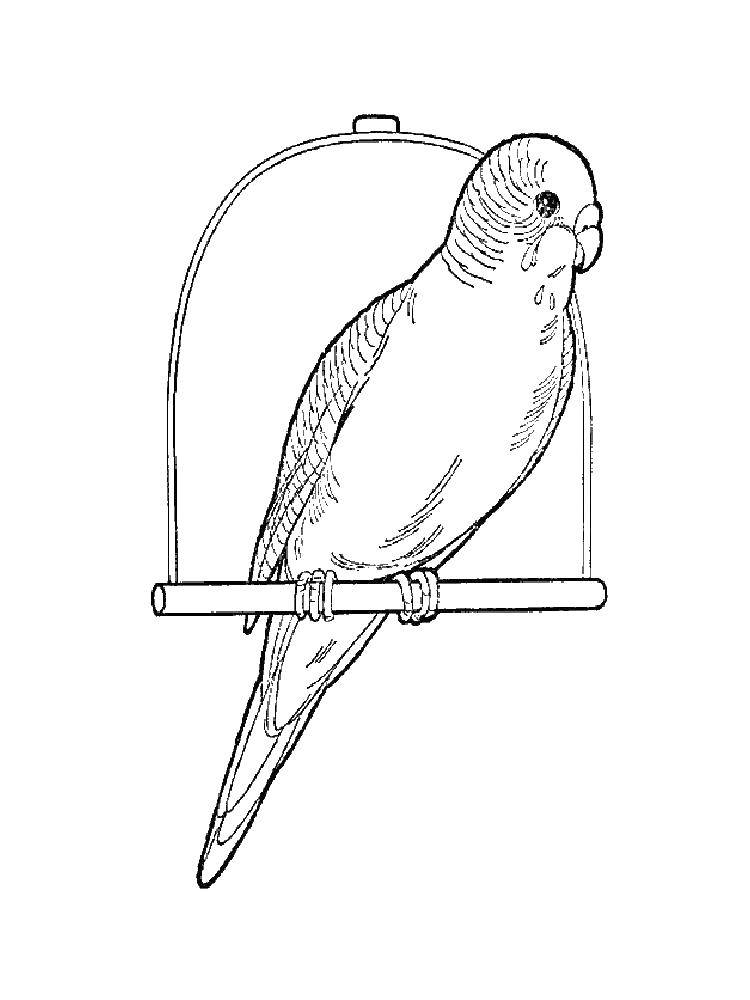 Online Coloring Pages Coloring Page Budgie Parakeet Coloring Books