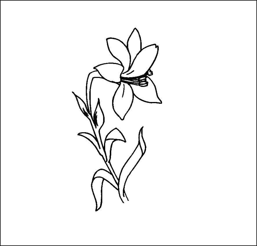 Раскраска цветы Скачать для мальчиков, рок, змеи.  Распечатать ,Для мальчиков,