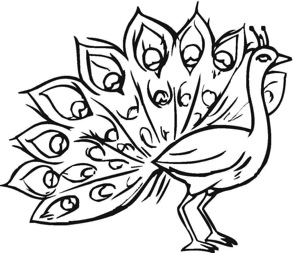 Раскраска павлин Скачать ,павлин, птицы, хвост,.  Распечатать