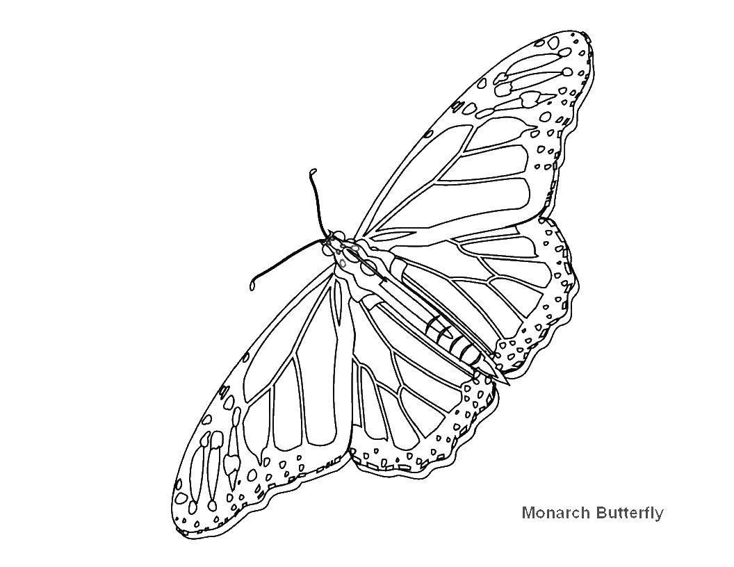 Раскраска бабочки Скачать ,гринч,.  Распечатать