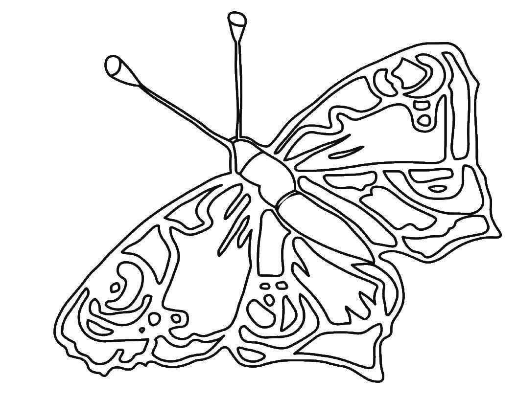 Раскраска бабочки Скачать ,клетка, цифры,.  Распечатать