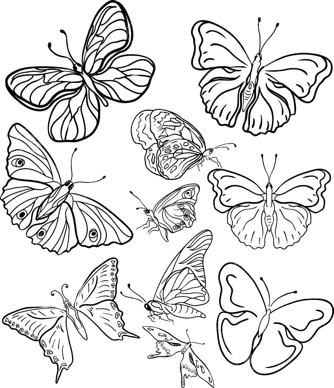 Раскраска бабочки Скачать ,бабочки,.  Распечатать