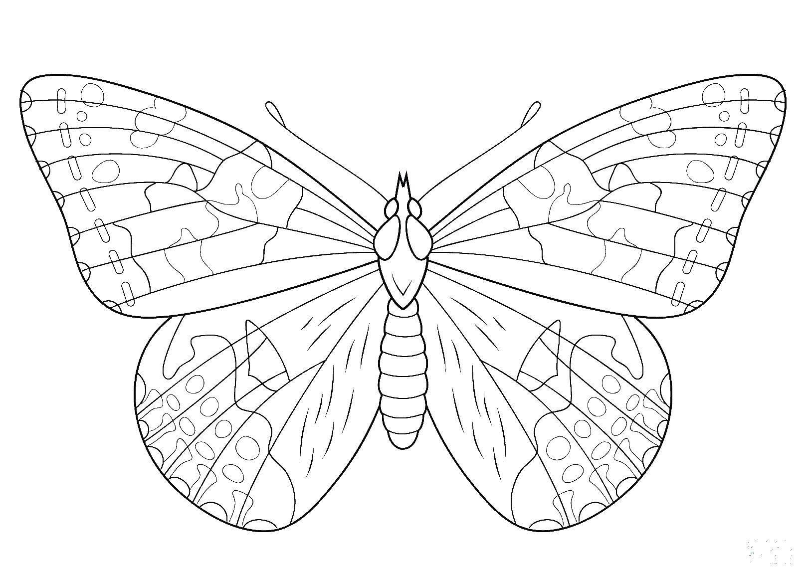 раскраски красива раскраска красивая бабочка бабочки