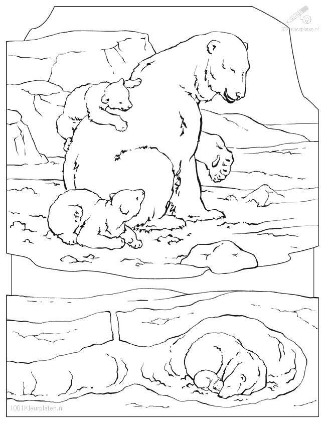 Раскраска дикие животные Скачать Скуби ду, Шэгги.  Распечатать ,Скуби ду,