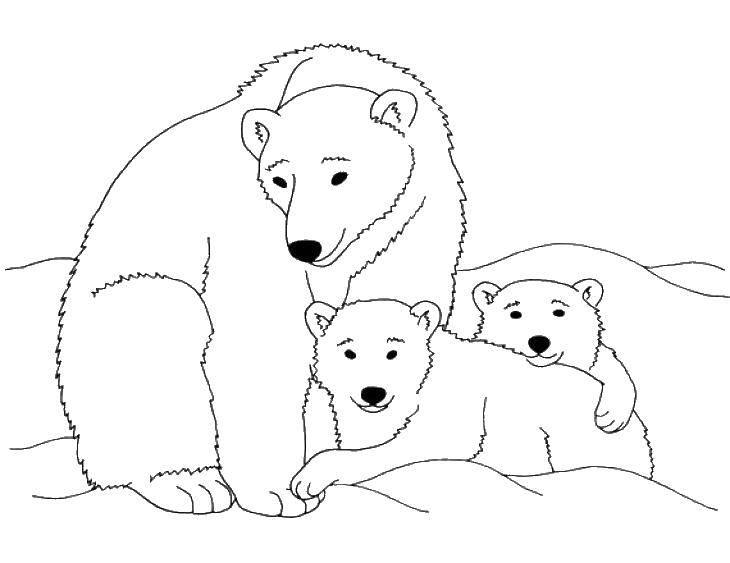Раскраска Медведица с малышами Скачать ,Животные, белый медведь,.  Распечатать
