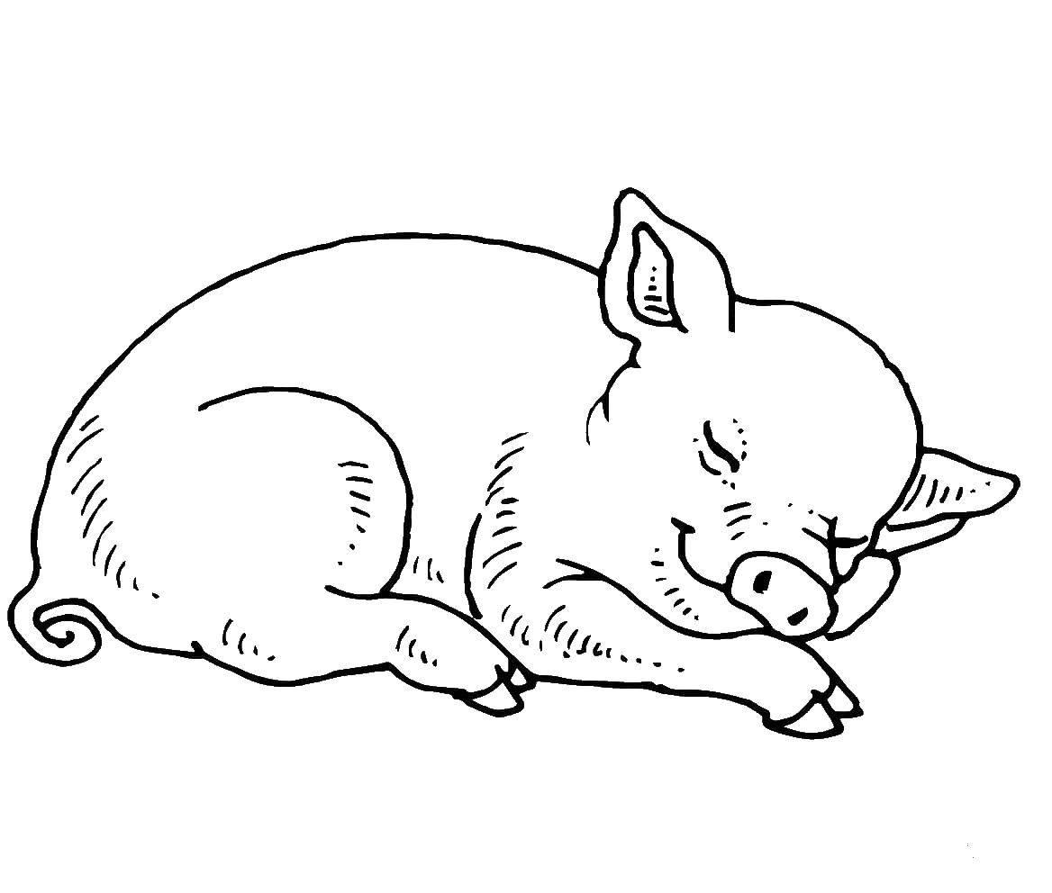 Раскраска Спящая свинка Скачать ,Сон, усталость,.  Распечатать