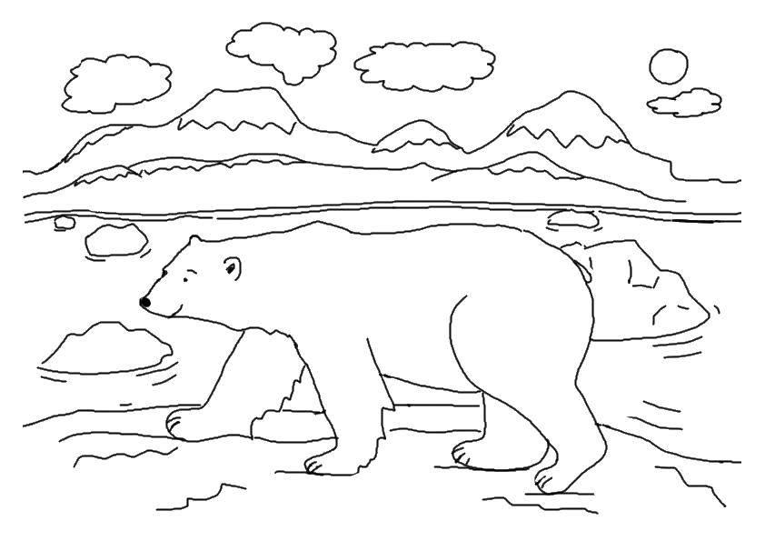 раскраски медведь раскраска белый медведь животные