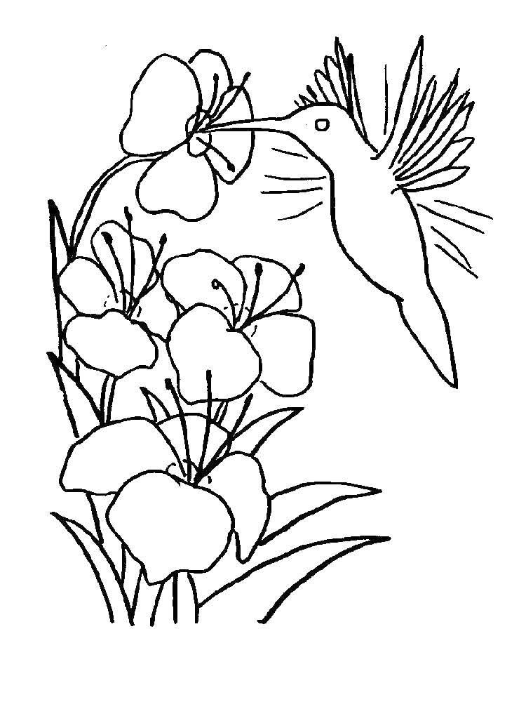 Раскраска колибри Скачать майнкрафт, люди, битва.  Распечатать ,майнкрафт,