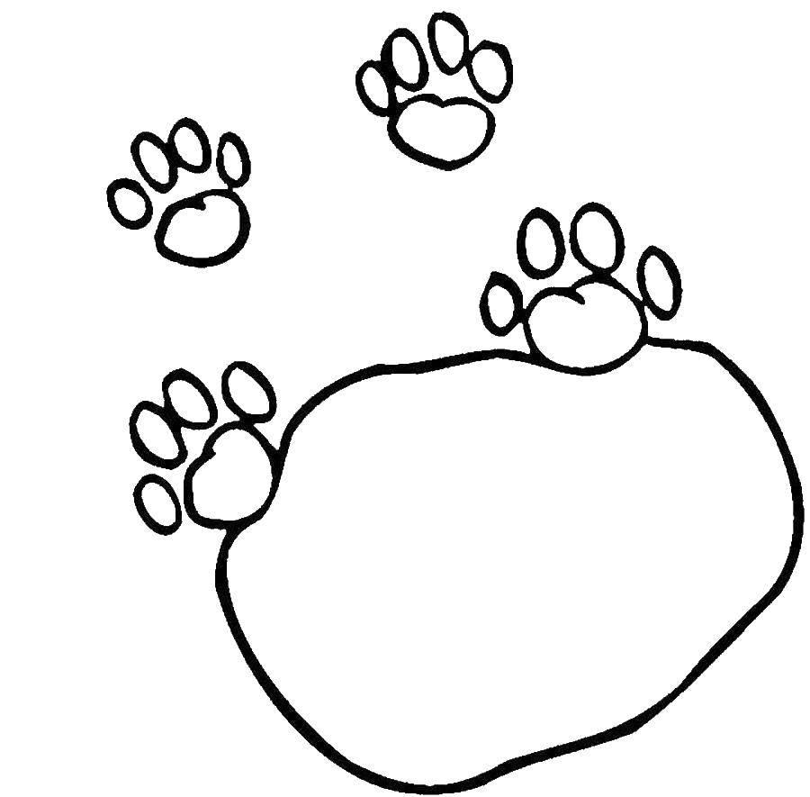 Раскраска Следы кошки Скачать следы животных, кошка.  Распечатать ,Следы животных,