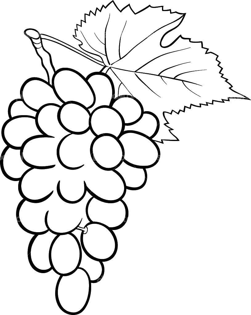 Раскраска виноград Скачать США, Америка, флаг.  Распечатать ,США,