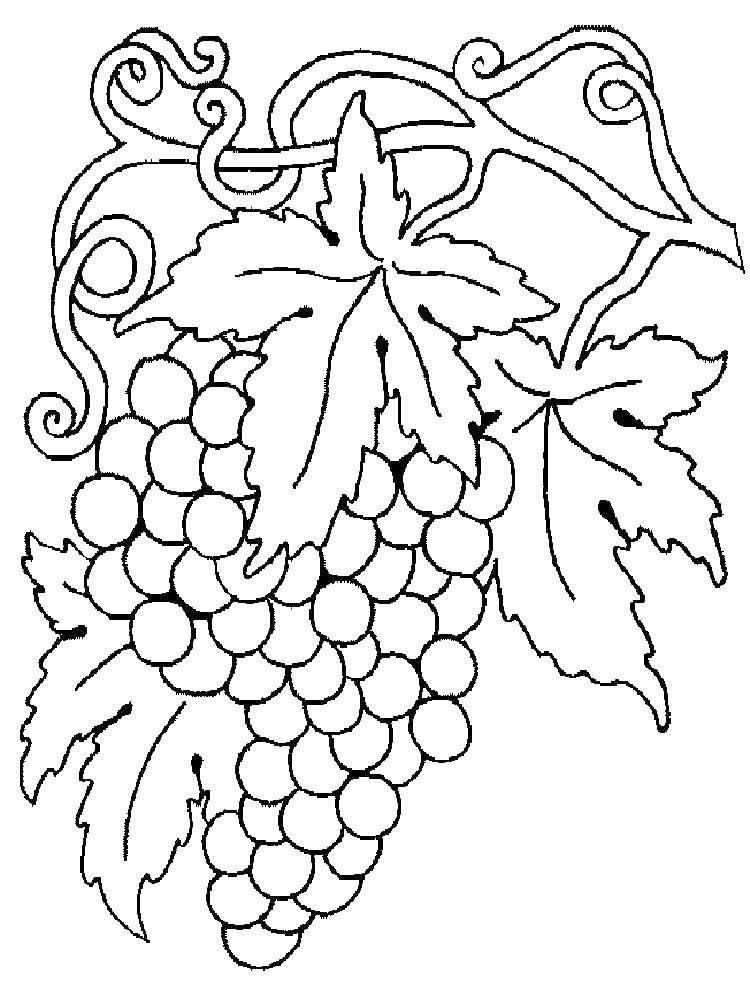 Раскраска виноград Скачать Игры, Майнкрафт.  Распечатать ,майнкрафт,