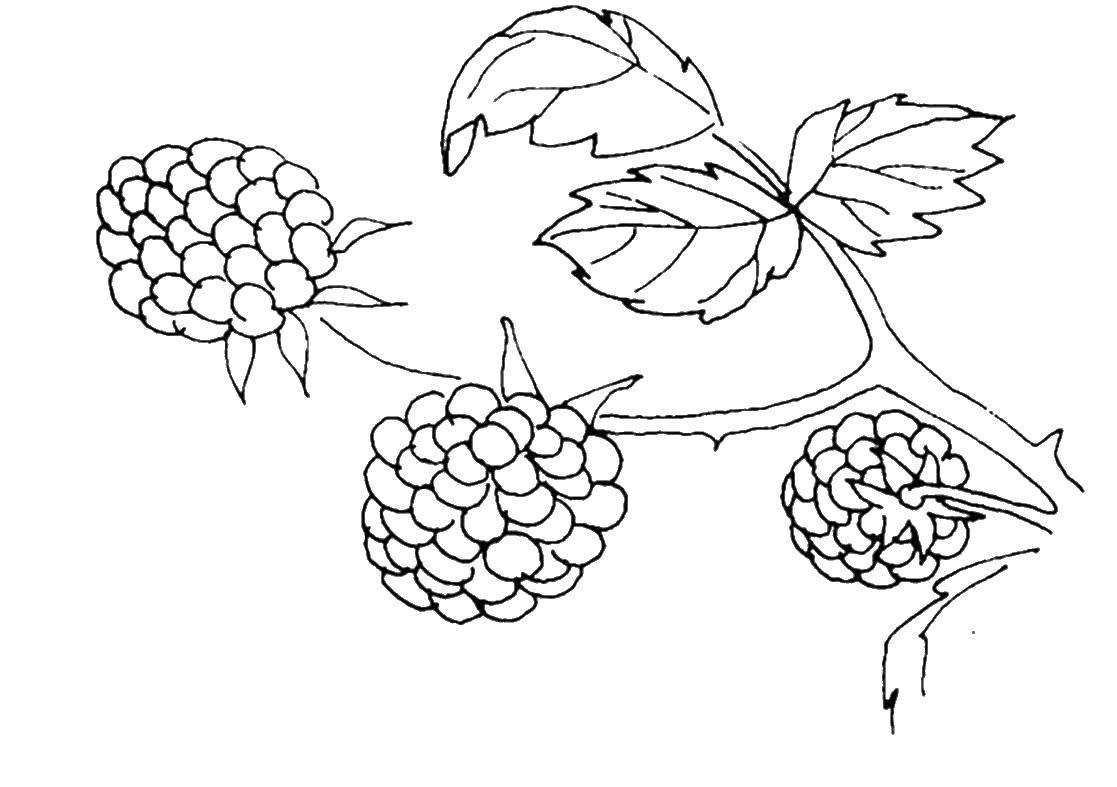 Раскраска ягоды Скачать Персонаж из мультфильма, Бен Тен.  Распечатать ,Персонаж из мультфильма,