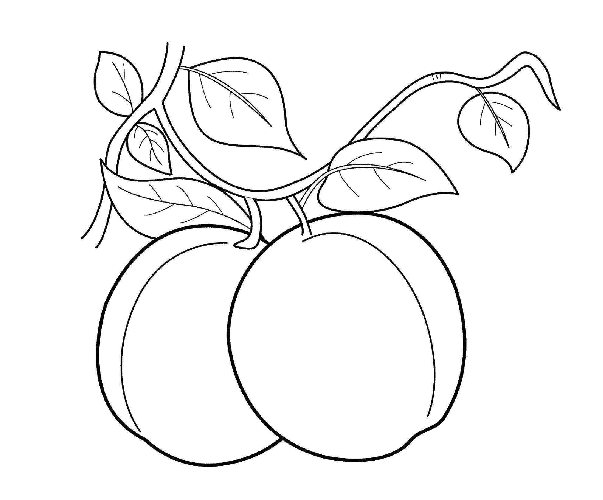 Раскраска фрукты Скачать Персонаж из мультфильма, Бен Тен.  Распечатать ,Персонаж из мультфильма,