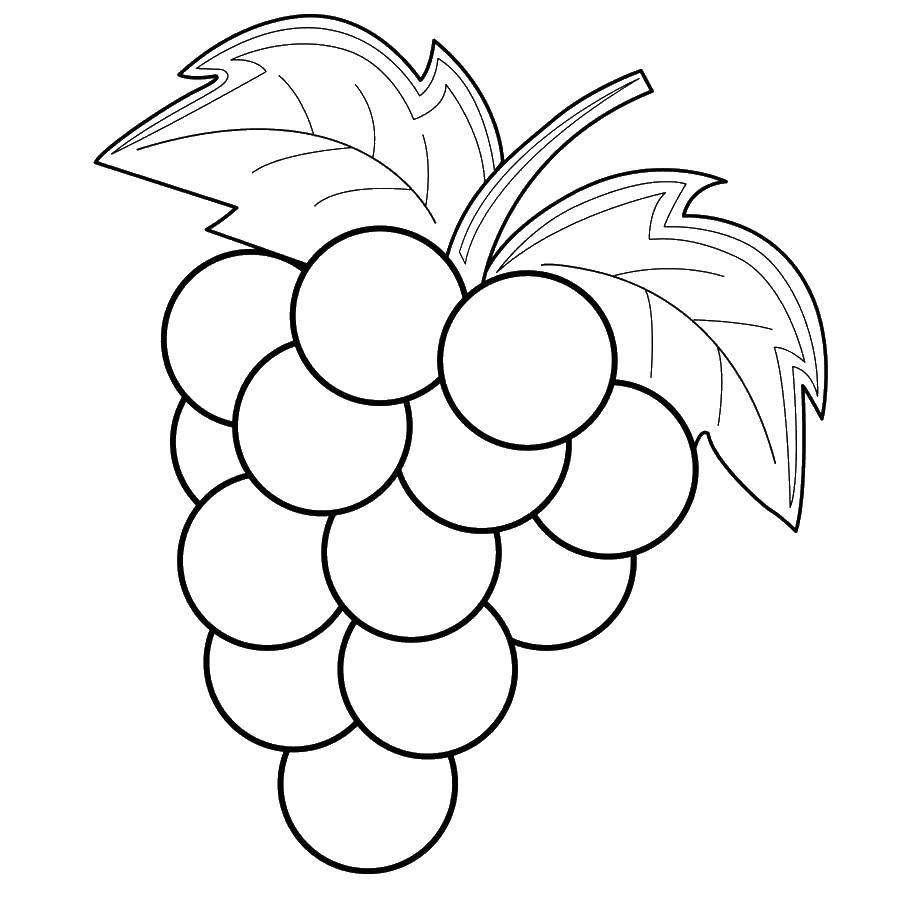 Раскраска виноград Скачать ,виноград, фрукты,.  Распечатать