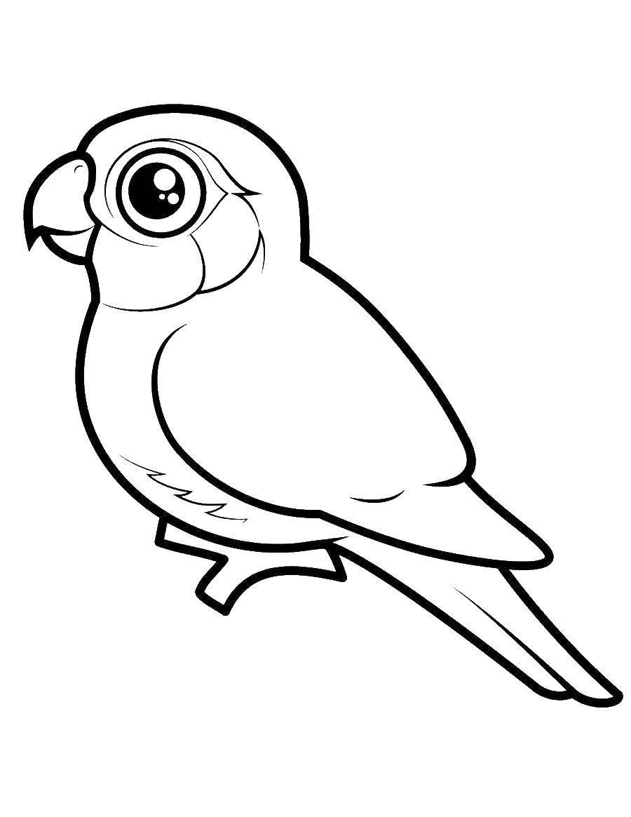 Раскраска птицы Скачать ,машина, ваз, калина,.  Распечатать