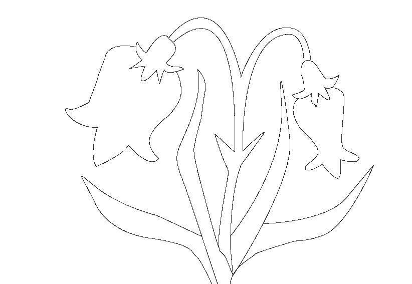 Раскраска Цветы колокольчики Скачать растения, цветы, колокольчик.  Распечатать ,колокольчик,