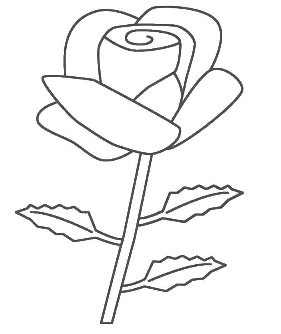 Раскраска цветы Скачать цветы.  Распечатать ,растения,