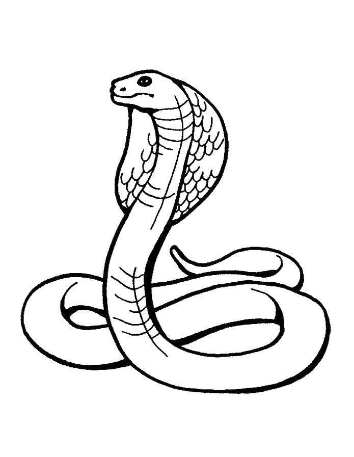 Раскраска змея Скачать ,Монстер Хай, школа,.  Распечатать