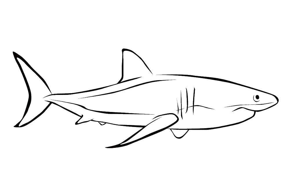 Раскраска Акулы Скачать Спорт, гимнастика.  Распечатать ,гимнастика,