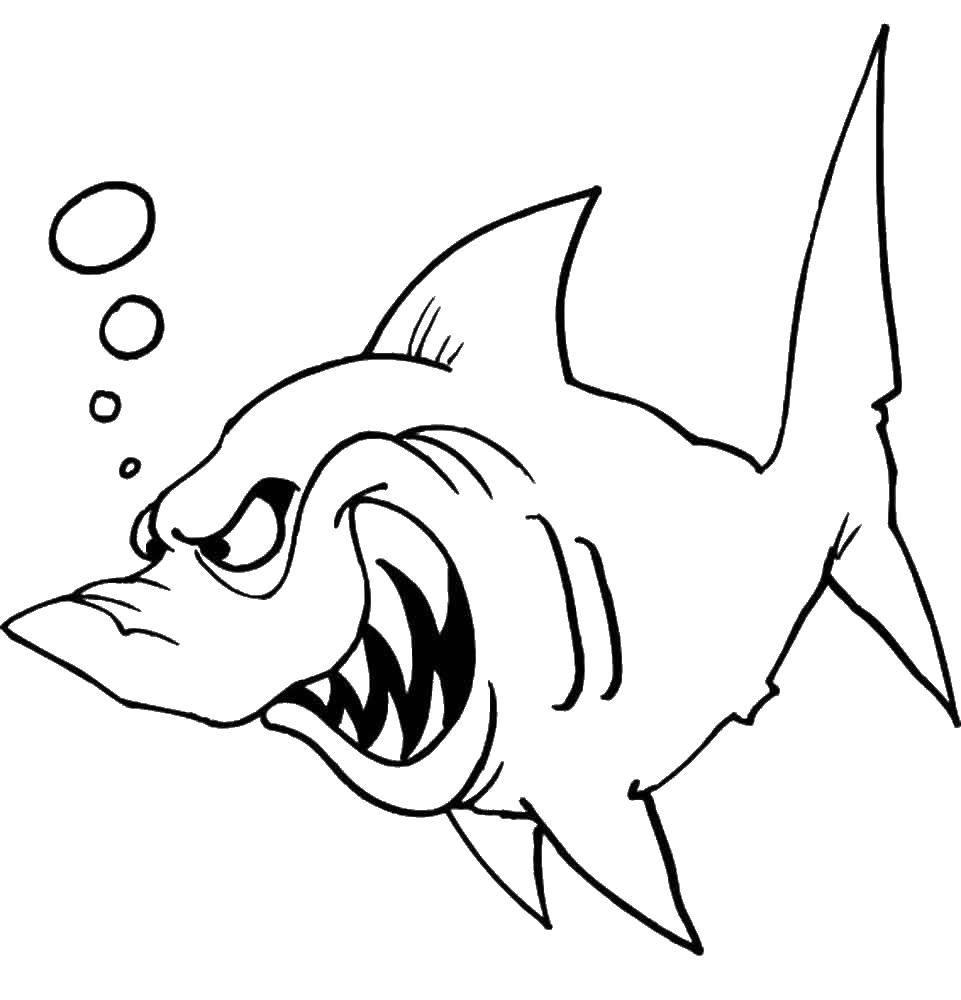Раскраска Акулы Скачать .  Распечатать