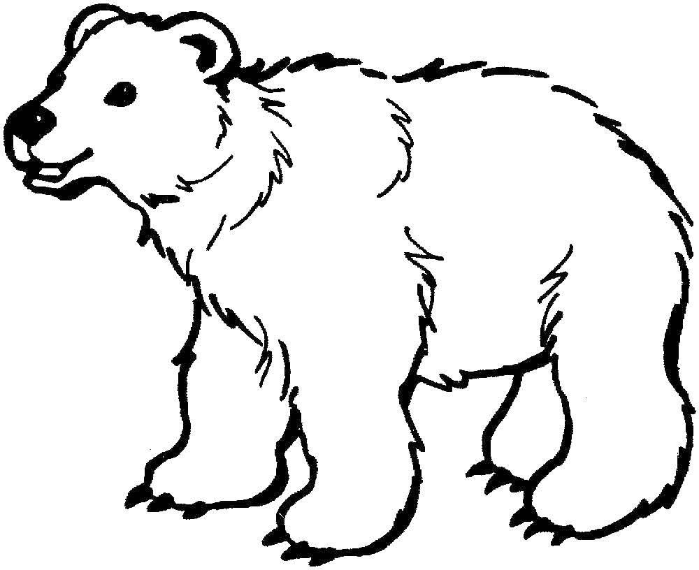 Раскраска медвежонок умка Скачать ,Животные, белый медведь,.  Распечатать