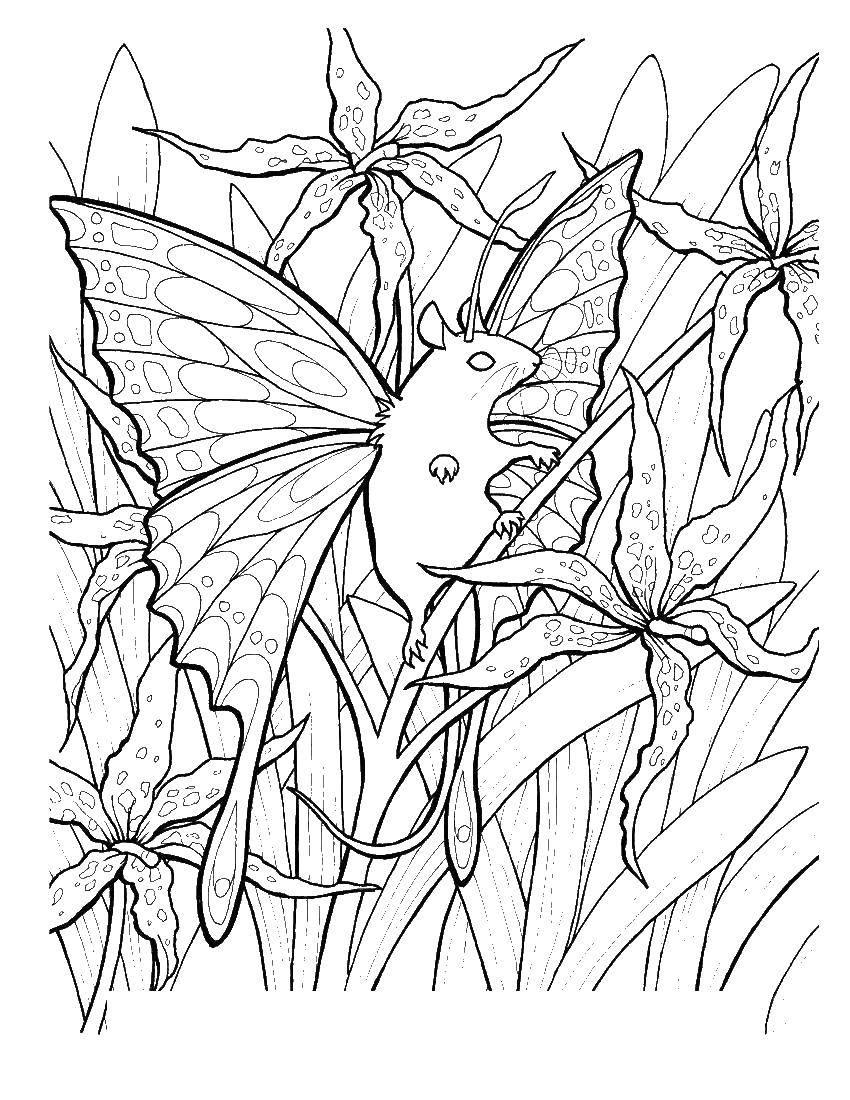 Раскраска Бабочка мышь Скачать бабочка, мышь.  Распечатать ,Волшебные создания,