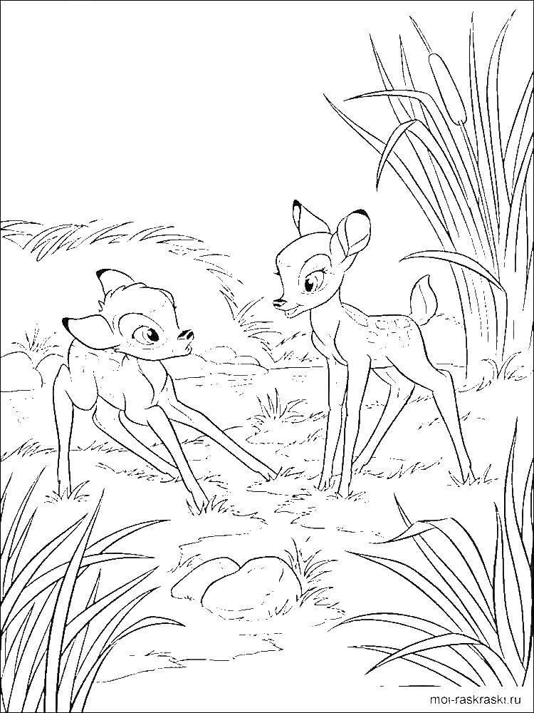 Раскраска Бэмби встретил друга Скачать бэмби, зайчик.  Распечатать ,бэмби,